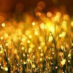 blur-bright-color-1125769